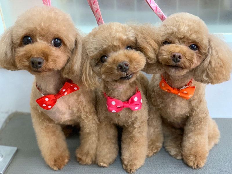 ふぁんふぁんでカットした可愛い犬たち